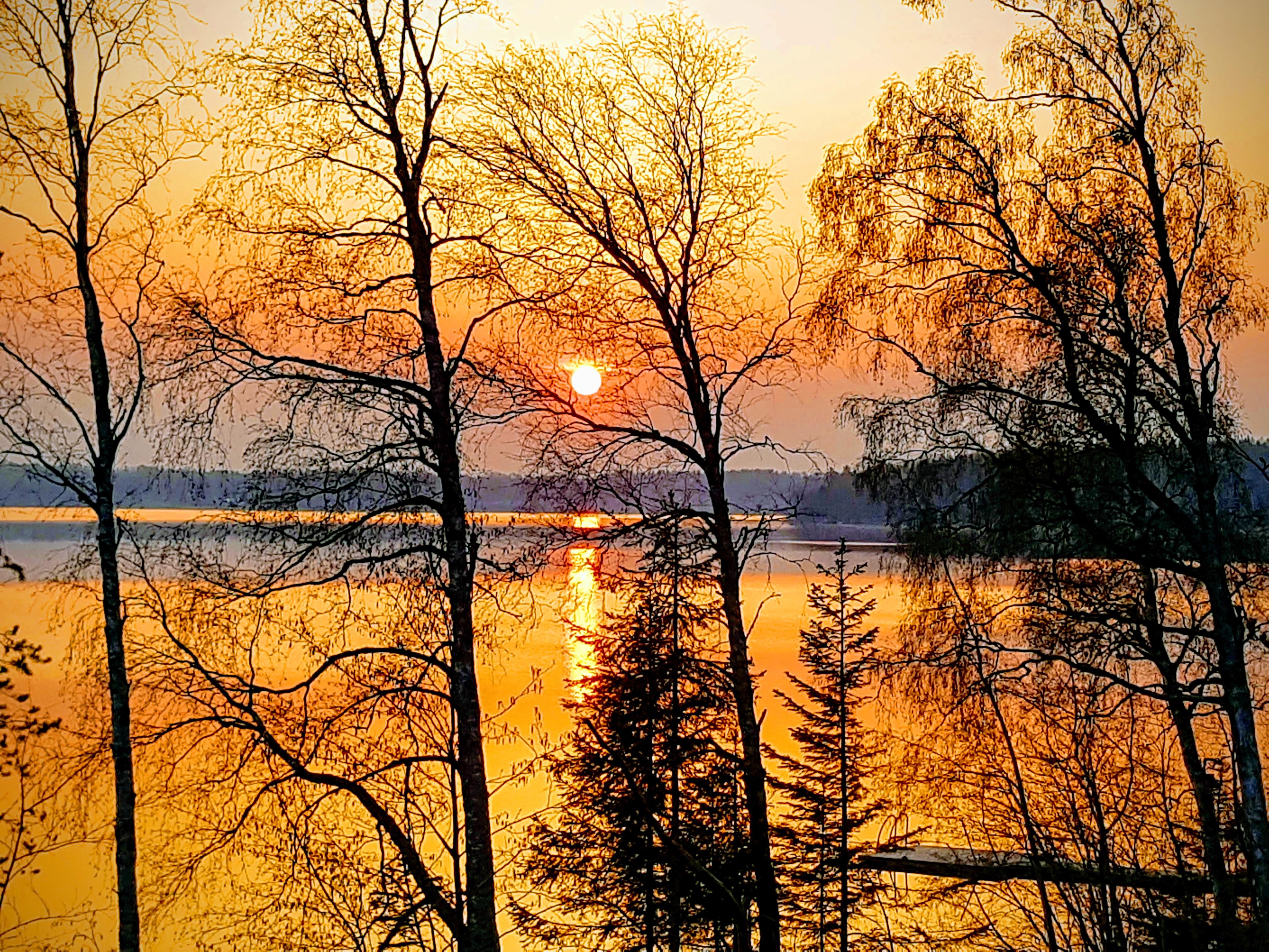 Bild tagen en morgon i Hälsingland...tänk om det blir så här den 25/5...detta vill ni inte missa.